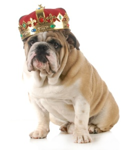 dog wearing crown